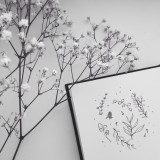 herbal drawing and flowers b/w