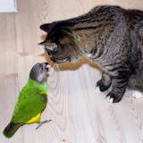 Love and play cat & parrot