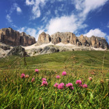 Flowers and mountains in Dolomites. Beautiful mountain panorama in the Alps