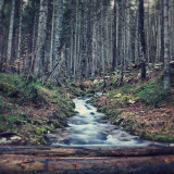 Stream in the vintage forest