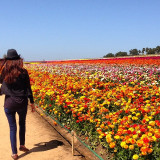 Having a stroll at beautiful flower fields at Carlsbad, California.