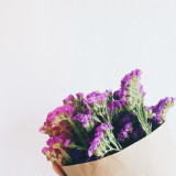 Purple flowers against white background.