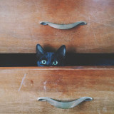 Kitten pokes his head out of a chest of drawers