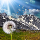 View of dandelion in mountains