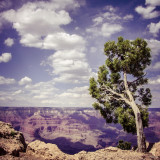 USA, Arizona, Grand Canyon, Single tree at the edge