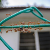 Close up of ants on railing
