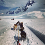 Dog sledding on a glacier in Alaska!