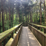 A view from the salcey forest skywalk uk-stunning-