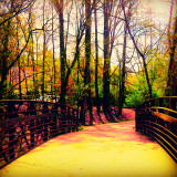 Always soothing to EXPLORE the FOREST via CHASTAIN PARK Walking Path - Atlanta GA -