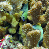 Underwater photography. Guam reef.