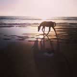 A magic moment. Me and the horse, the ocean sound and the sun set