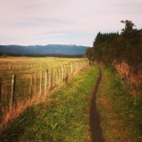 I took this while I was biking with the rest of my family. This is the bike track follows the Tongariro River, at Taupo, New Zealand