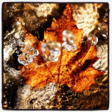 Maple leaf in water colours.