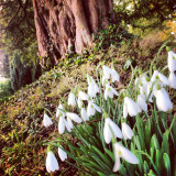 First signs of Spring, Barton Lacey