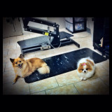 Sasha & Navia, two completely different Pomeranians