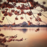 Jefferson Memorial at sunrise during the Cherry Blossom season 2014, Washington DC