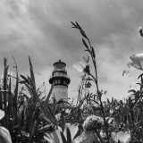 Summer at Pigeon Point
