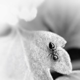 Captured this shot with My iPhone 4s and Photojojo macro lens.  Edited with snapseed from my phone