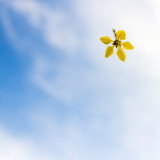 Yellow flower falling from the sky