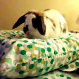 Pet rabbit on pillow