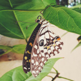 I was feeding my birds when I saw this beautiful butterfly flying around me . . I Couldn't stop taking pictures..