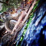 I unexpectedly ran into a baby squirrel who had yet to learn the ways of the world.