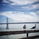 A photo taken at San Francisco Embarcadero. The seagulls were preening and posing just for us.