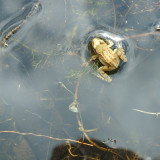 A frog came to visit us at Preston Montford