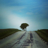 A lonely tree at the end of the road in the dark blue sky