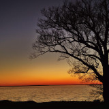 Tree on the James River in Newport News VA
