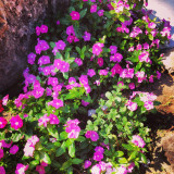 Flowers, Gran Canaria
