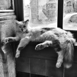 A cute cat sleeping in Taksim Tunel Station - Istanbul . . Residents of Istanbul have a special relationship with stray cats
