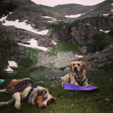 Phoebe and Petra resting while on vacation at fancy lake in Colorado
