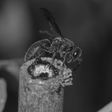 Insect,B&W