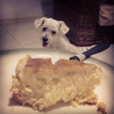 Dog looking at a piece of pie.