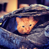 This is Sir Majesty Peter, and if you make the mistake of leaving an empty (or full) trash bag on the floor, Sir Peter the Cat will usurp that bag -- claim it as his own. Do not cross his majesty.
