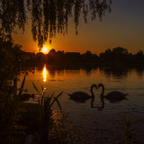 Sunset Swans original re-uploaded due to demand