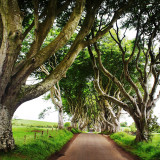 As seen on Game of Thrones...the Dark Hedges
