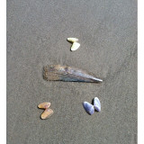 Playing with shells on the beach in Port Aransas, Texas.