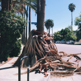 Palm tree that lost its branches