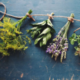 Herbs being dried.