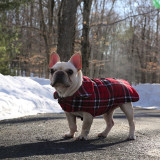 The noble Frenchie surveys his wintry realm. @turtlebatpig