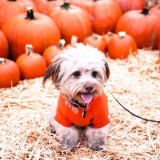 Pup in the Patch 🎃
