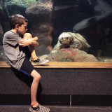 Turtle and boy