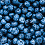 Great bilberry / Blueberry close-up