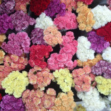 Bunches of carnations