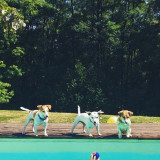 3 dogs and the swimming-pool