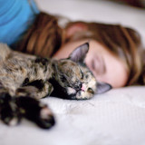 Cat,nap, sleep,girl, friends, peaceful, togetherness