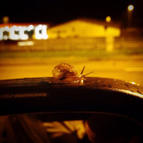 Snail on my car's side view mirror (on the road)