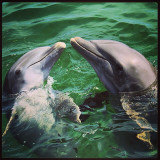🐬🐬 Dolphins In Caribe